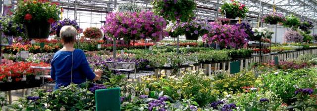 shopper-in-greenhouse