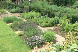spring-herbs