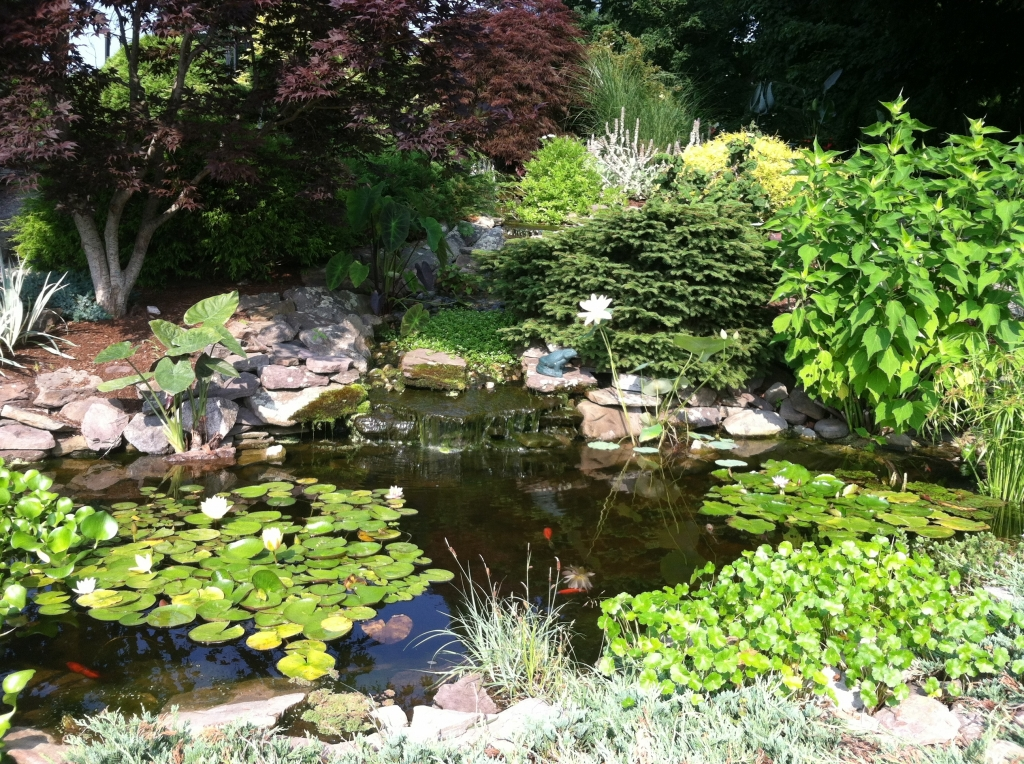 Visit our water feature and bring the kids to see our goldfish pond!