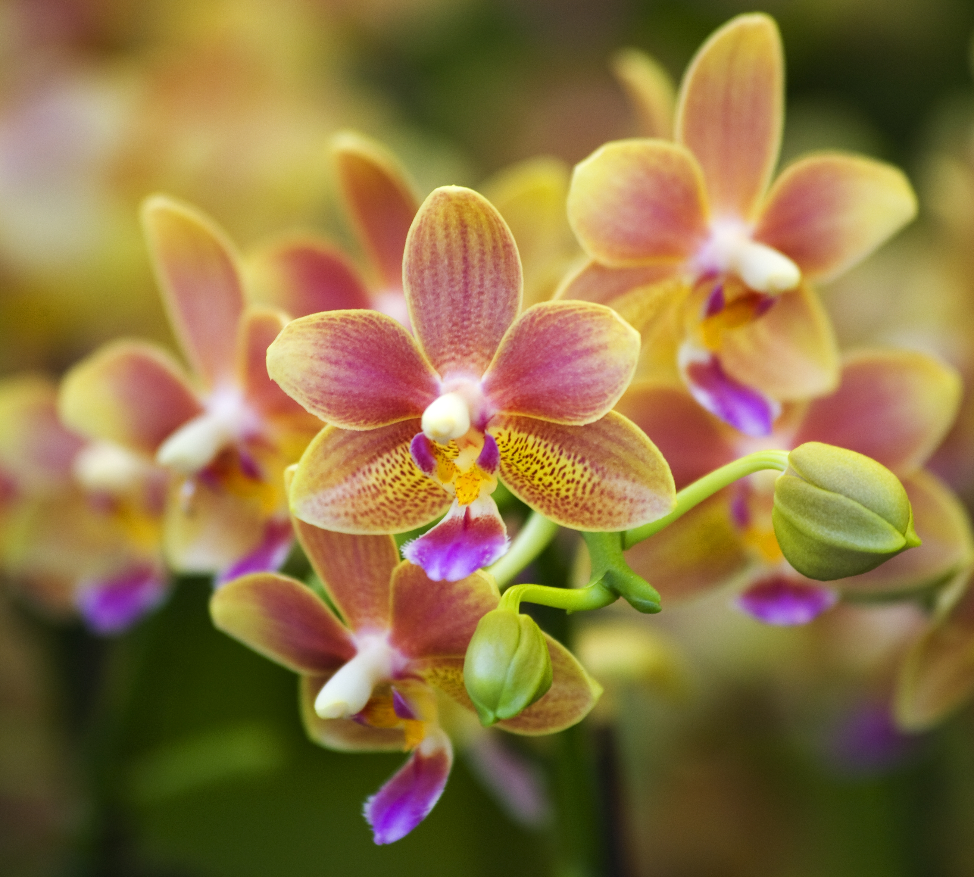 2014orchid-celeebration-image