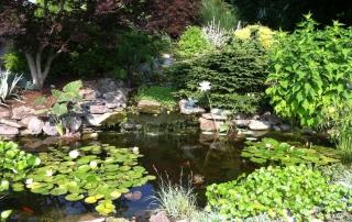 WATER GARDENING SEMINAR JULY 27