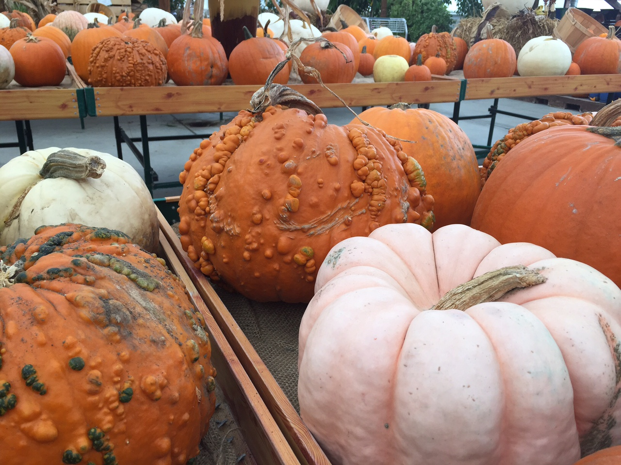 specialty-pumpkins