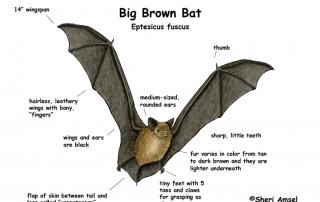 The NH Bat Project 10/7/17@10am