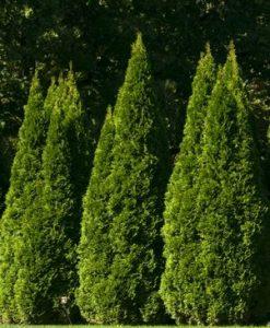 TREES/SHRUBS
